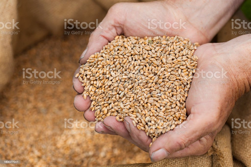 Cupped hands holding cereal royalty-free stock photo
