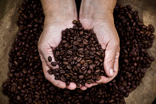 Cupped hands holding coffee beans stock photo