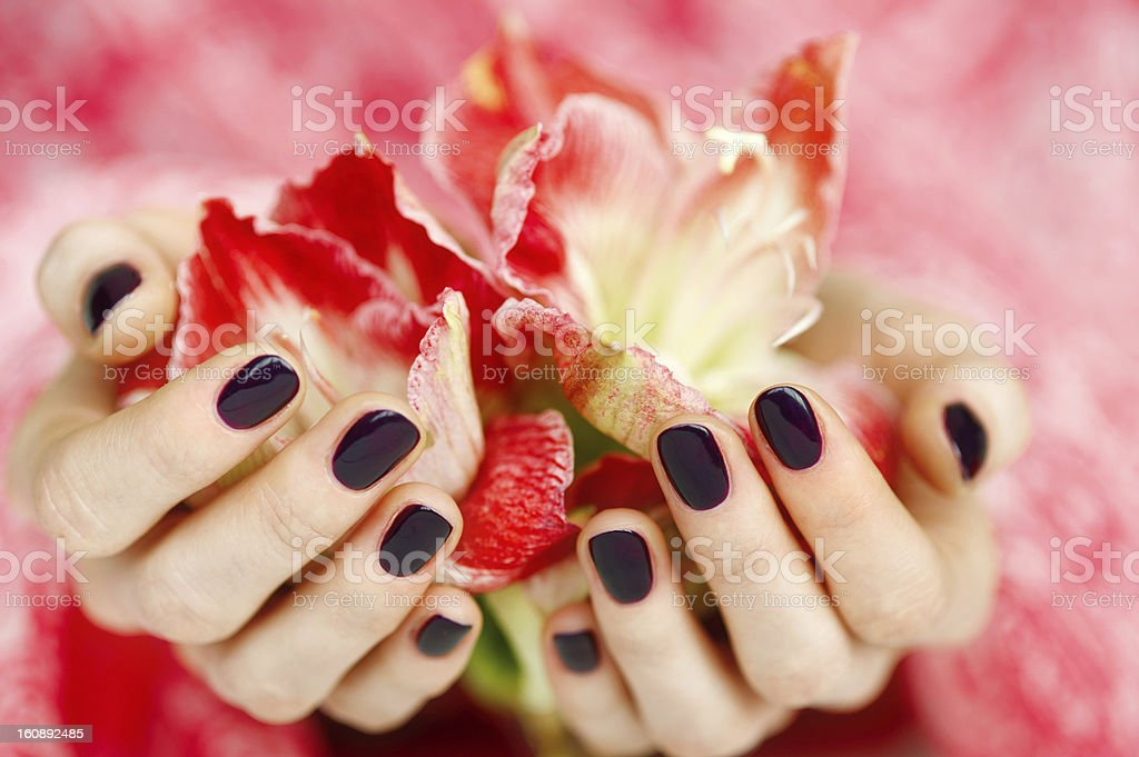Cupped hands with dark manicure holding red flowers royalty-free stock photo
