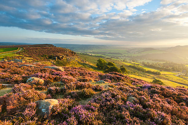 curbar edge heather, peak district national park - outcrop stock pictures, royalty-free photos & images