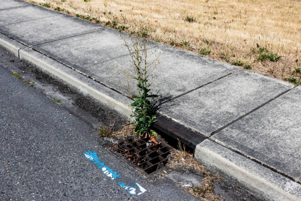 Curbside storm drain clogged with debris stock photo