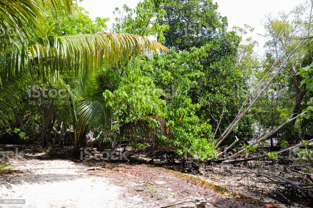 Curieuse island coastal trail to Anse St. Jose beach. Wild nature of Seychelles islands. Flora of East Africa stock photo