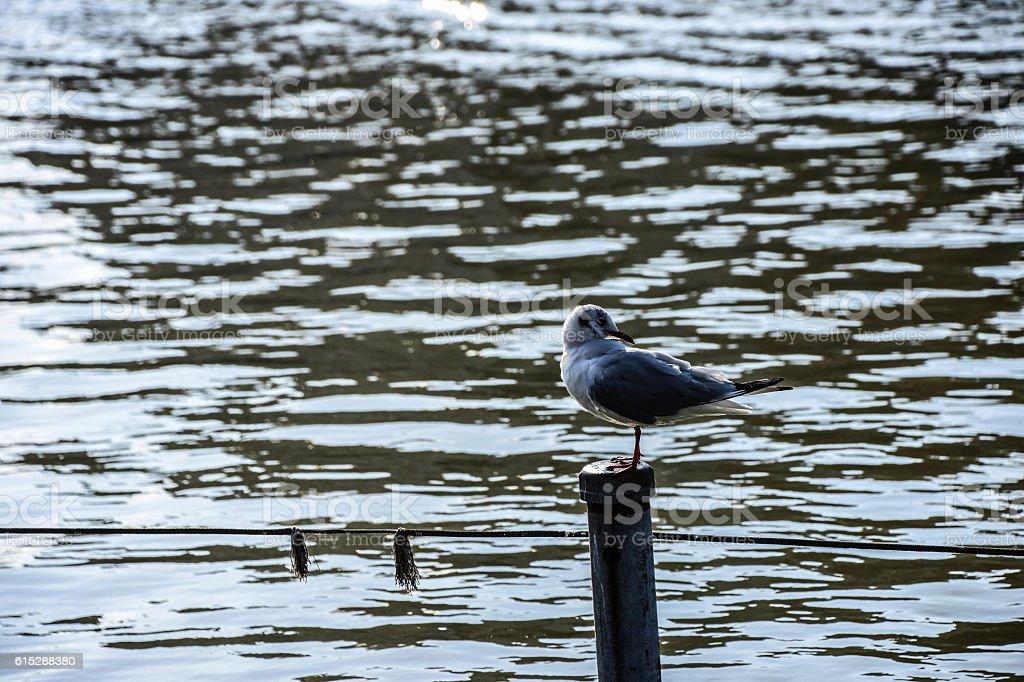 Curios Blue bird near pool stock photo