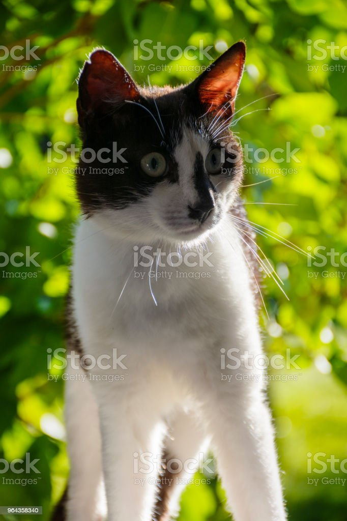 Curios cat stock photo