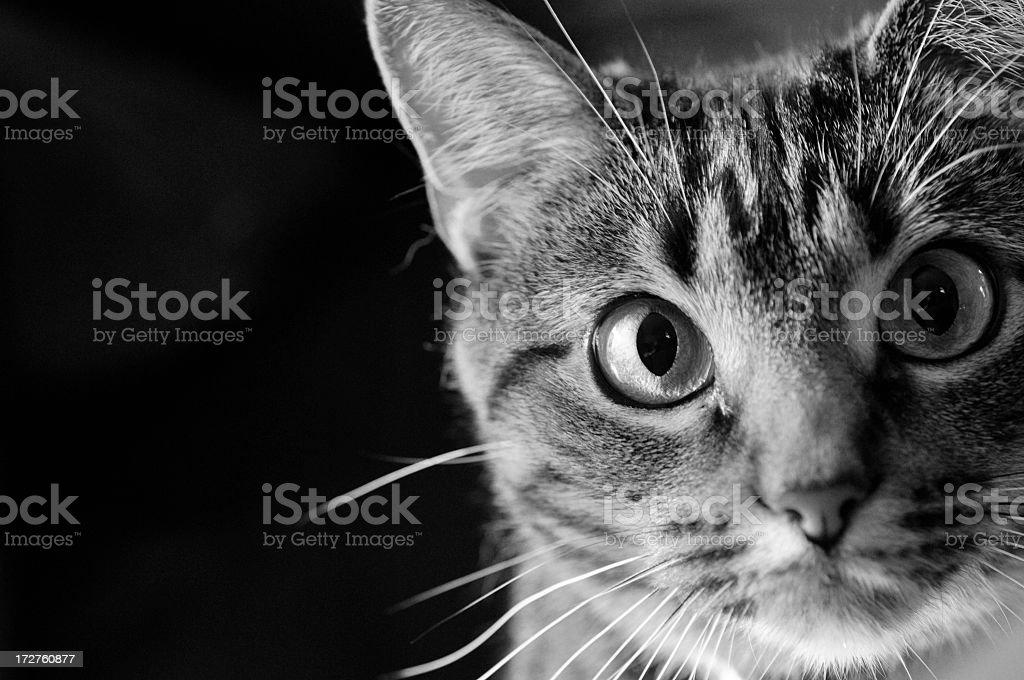Curiosity Cat stock photo