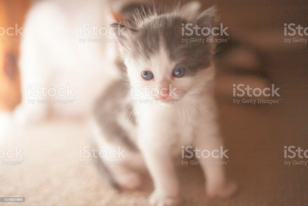 Curiosity of the cat stock photo