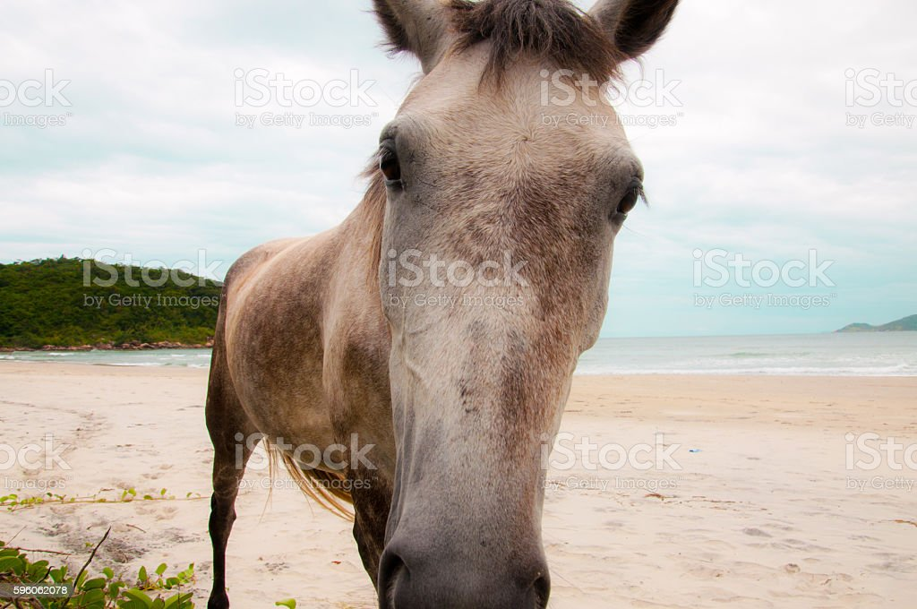 Curiosidade do Cavalo royalty-free stock photo