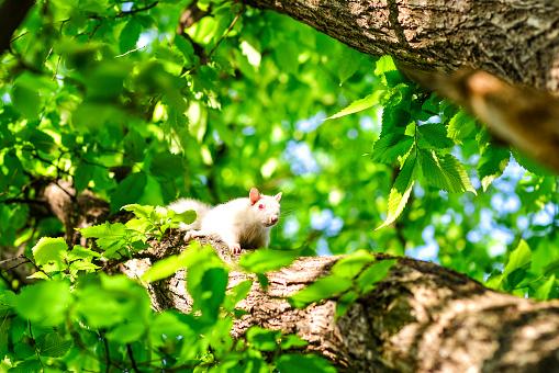 Curious Albino Squirrel in Tree