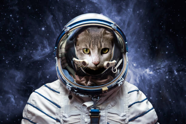 curious astronaut cat in outer space, explore the universe, elements of this image furnished by nasa stock photo