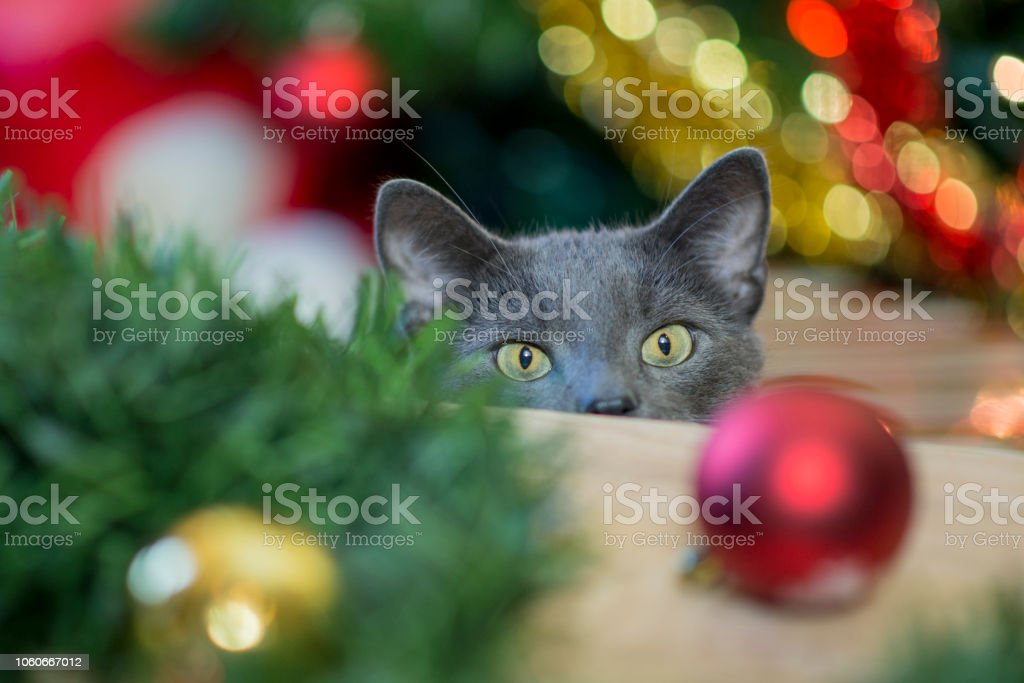 Curious at the Holidays stock photo