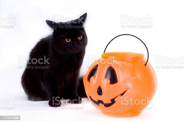 Curious black kitten and candy pumpkin picture id177510386?b=1&k=6&m=177510386&s=612x612&h=ds26cnaepxyrmu5fx2lexehbhmufn9stcf  ntpkve0=