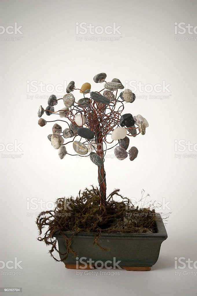 Curious bonsai royalty-free stock photo