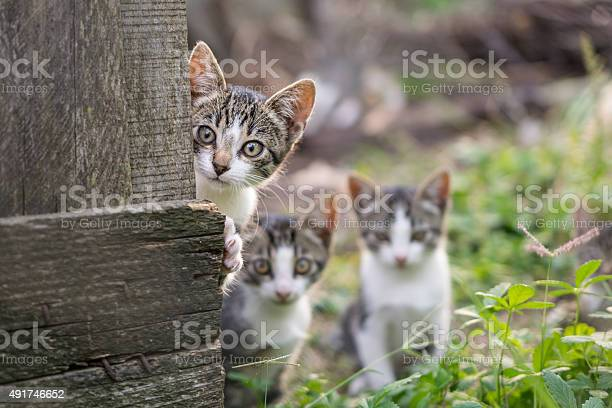 Curious but shy kittens picture id491746652?b=1&k=6&m=491746652&s=612x612&h=d7i21zhkok5ukrly8e5g8rtxmm asi3tpy8vll9klj4=