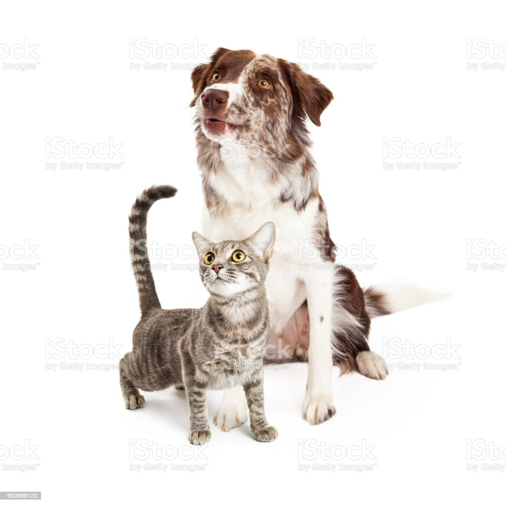 Curious Cat and Dog Looking Up stock photo