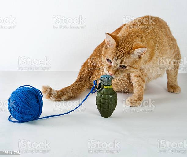 Curious cat and hand grenade picture id176141798?b=1&k=6&m=176141798&s=612x612&h=nku2 z8qtagrui64qgcss3ixabf95pysedzr tejcvq=