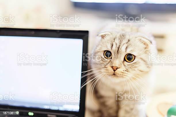 Curious cat and laptop together picture id187108110?b=1&k=6&m=187108110&s=612x612&h=iaisnp2rum8kjfqxh4gkffppmbrjqfrhmuiq9yzwxww=