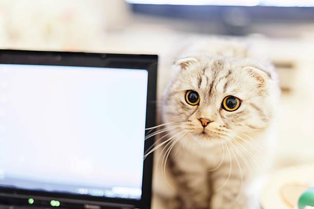 Neugierige Katze und laptop zusammen – Foto