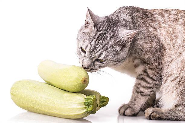 Curious cat and zucchini picture id528497611?b=1&k=6&m=528497611&s=612x612&w=0&h=pc02is6xqk8033lt8kiwcmlx 0sgrova7t6rhlkw8og=