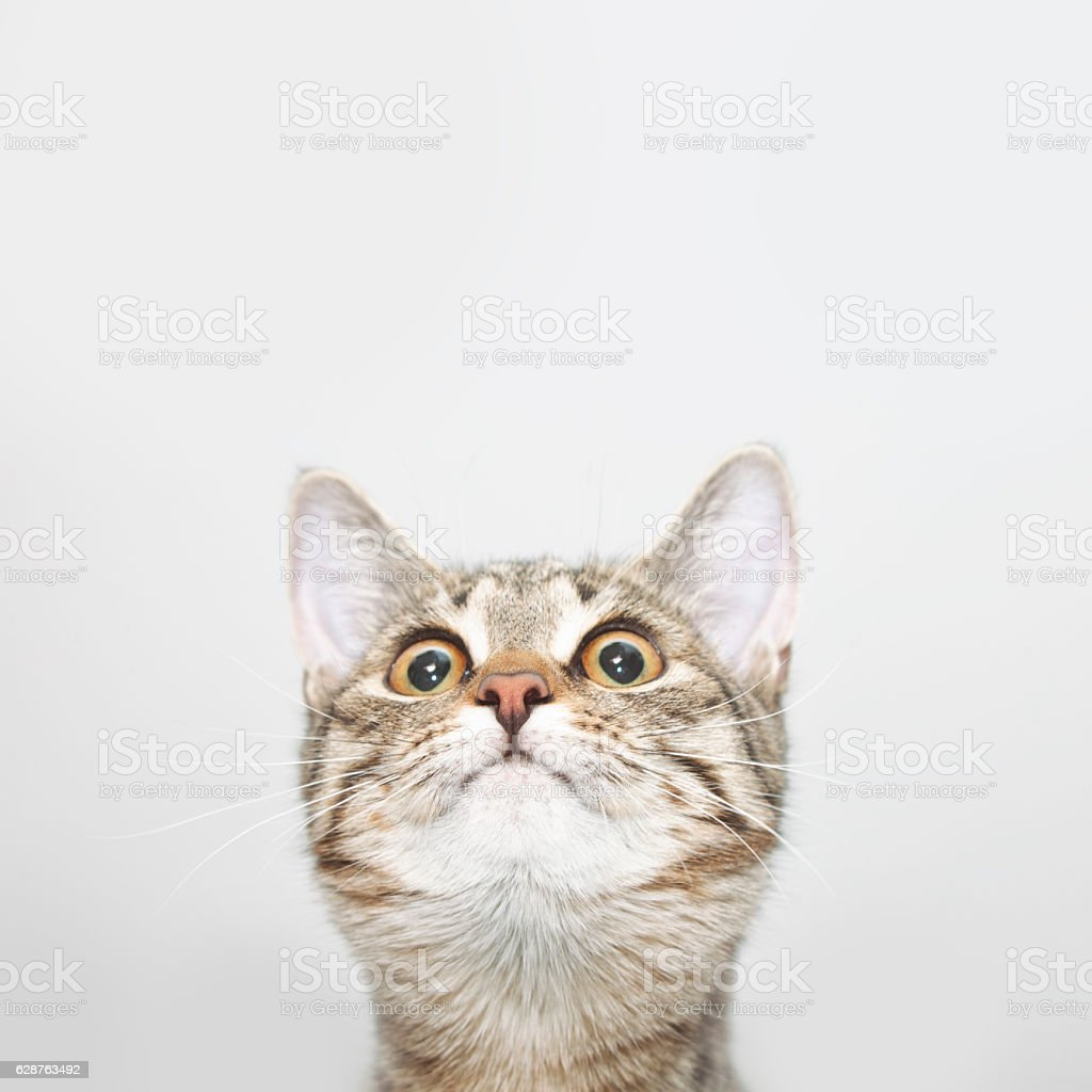 Curious cat face looking up stock photo