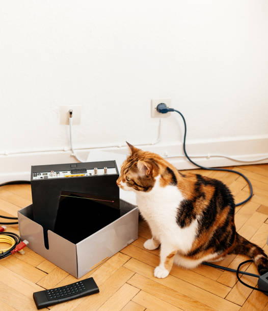 Curious cat helping the installation of the new internet provider picture id926101108?b=1&k=6&m=926101108&s=612x612&w=0&h=qisbyajjyfwyj35rovx o6onqyfze4bzdgbxhotnady=