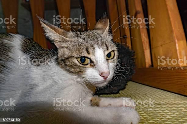 Curious cat hiding under the bed picture id820713150?b=1&k=6&m=820713150&s=612x612&h=9ser51q3yxr2dnqxxtfhgzwzjcdjfdctznigp3cwyg0=