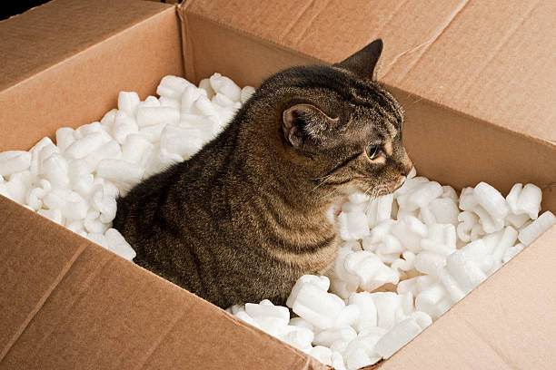 Curious cat in cardboard box stock photo