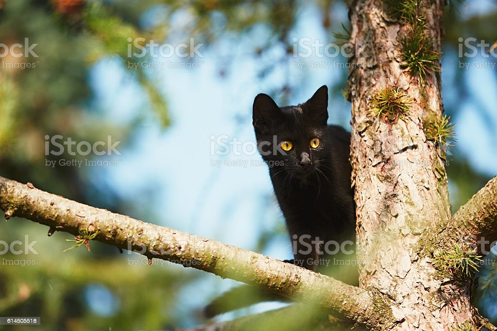 Curious cat in the garden stock photo