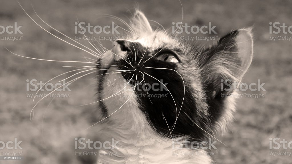 Curious cat looking up stock photo