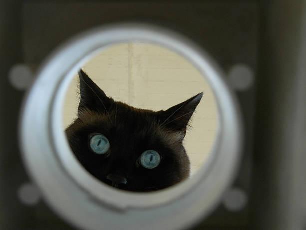 curious cat looks into a hole - suche katze stock-fotos und bilder