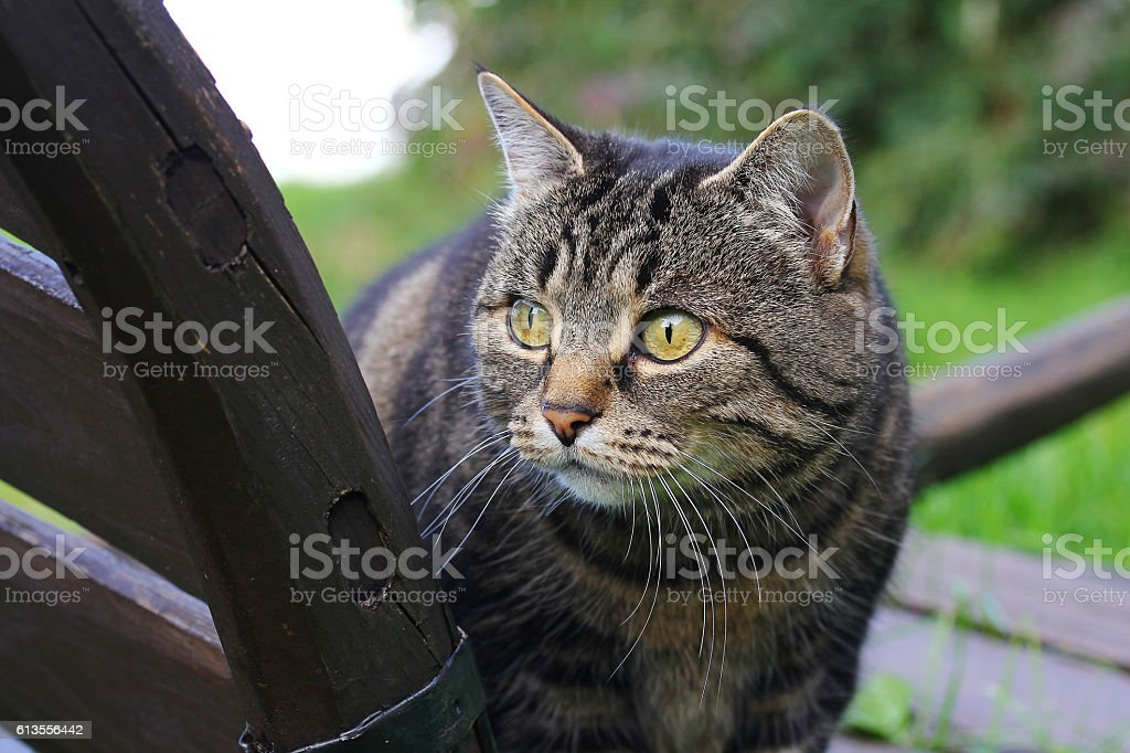 curious cat on a wooden cart stock photo