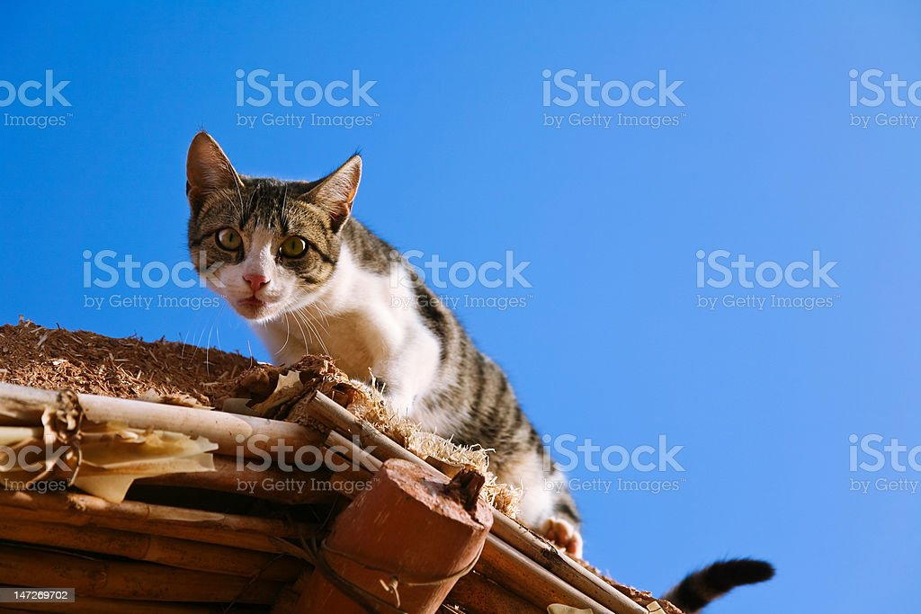Curious Cat on the Roof stock photo