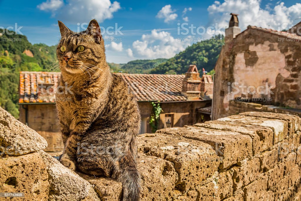 Curious cat on the stone wall in the town.