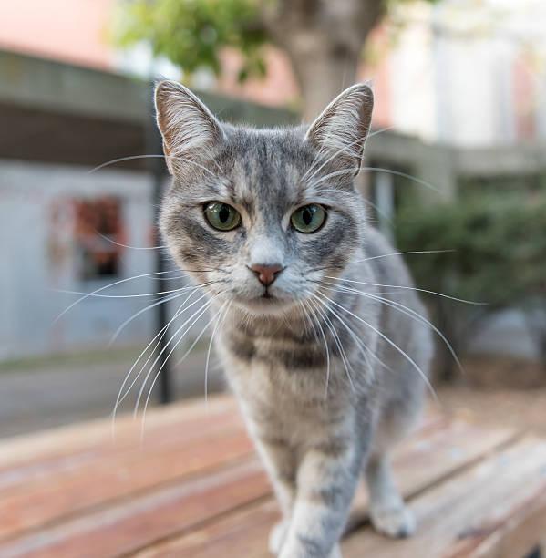 Curious cat on the table picture id615284898?b=1&k=6&m=615284898&s=612x612&w=0&h=fyg3kfvogpwmshlkxjas98bk4sxjz xqcmalyqmcwrm=