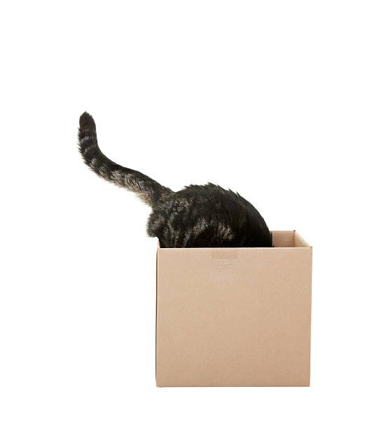 Curious cat picture id178458804?b=1&k=6&m=178458804&s=612x612&w=0&h=i2rilrokxqdfmse8w3gwk74ccq6k5hti00h2i4qw4qe=