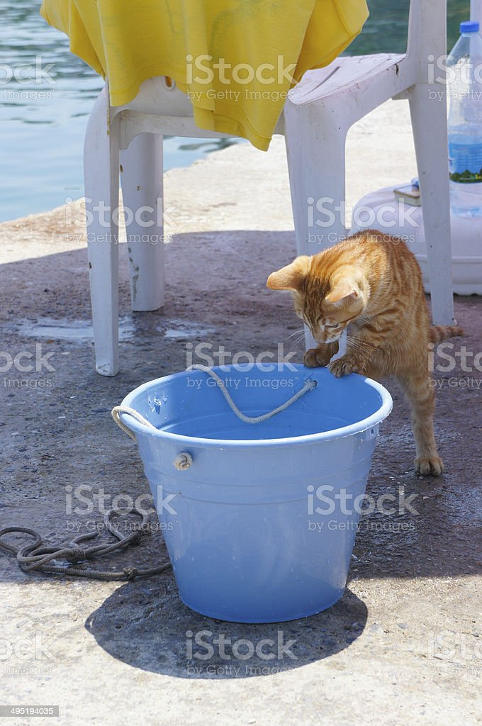 curious cat royalty-free stock photo
