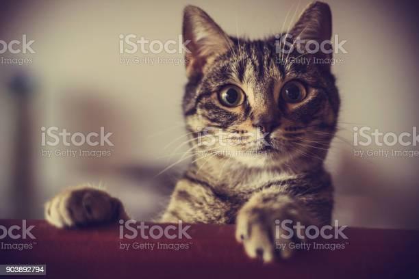 Curious cat picture id903892794?b=1&k=6&m=903892794&s=612x612&h=i88lrkrnc7hg5latt9ehyplkpip9wxeb0gts1l74qb0=