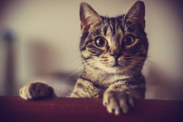 nyfiken katt - kattdjur bildbanksfoton och bilder