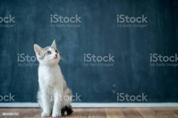 Curious cat picture id904463752?b=1&k=6&m=904463752&s=612x612&h=iatx0xora7doesbcwz r4c1esqciesiqek9 cg 5jwa=
