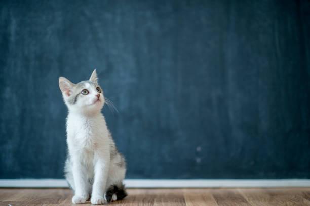 Curious cat picture id904463752?b=1&k=6&m=904463752&s=612x612&w=0&h=6bf2857mr2wk8y048475q1lm0e1dmsge4w0rrmuwaps=