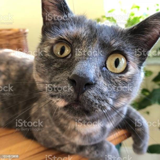 Curious cat staring with wide eyes picture id1014573838?b=1&k=6&m=1014573838&s=612x612&h=wccfbno9jwkszvy74urno20ebs6hou1ni5vzx0ykqmi=