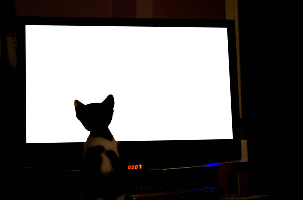 Curious cat watching television picture id891069330?b=1&k=6&m=891069330&s=612x612&w=0&h=2ucddkodivcbdebsq8ovrloe kptvmszzkofsyzgva8=