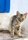Curious cat with green eyes in the Medina of Sousse on Tunisian street