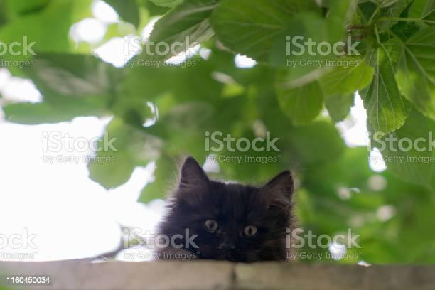 Curious cats iiii picture id1160450034?b=1&k=6&m=1160450034&s=612x612&h=v 0dnzmgs wbnzxf0sgmnzo ar70ez gjeypfldlb60=