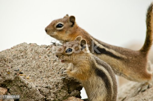 Curious chipmunks are looking for some food