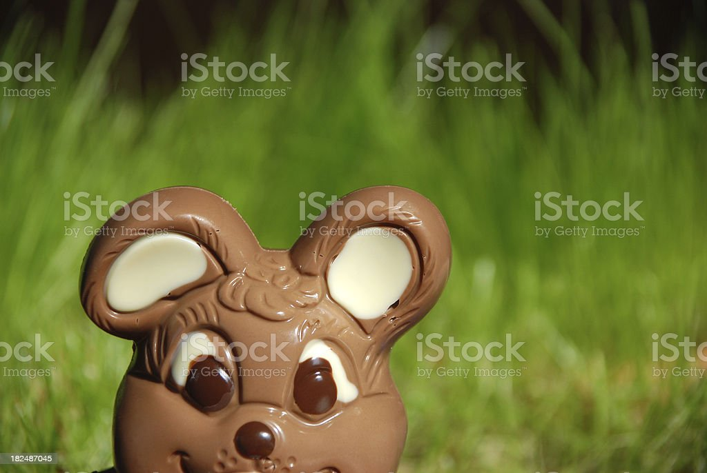 curious chocolate Easter bunny royalty-free stock photo