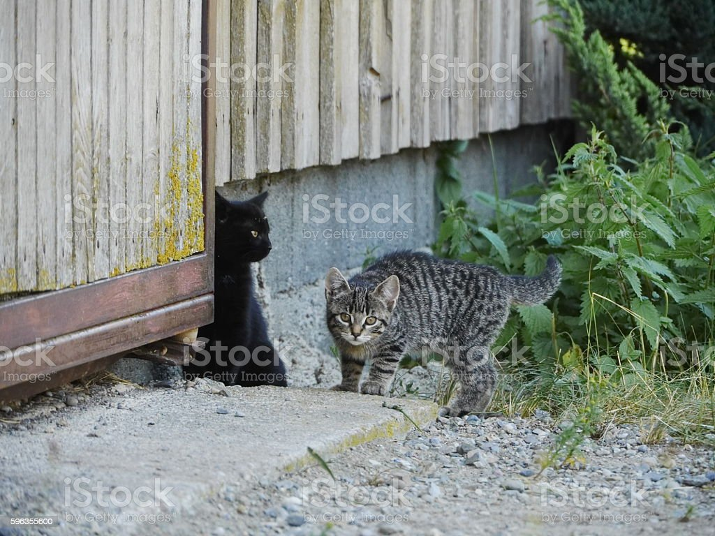Curious cute funny cat royalty-free stock photo