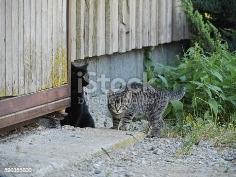 Curious Cute Funny Cat Stock Photo & More Pictures of Animal
