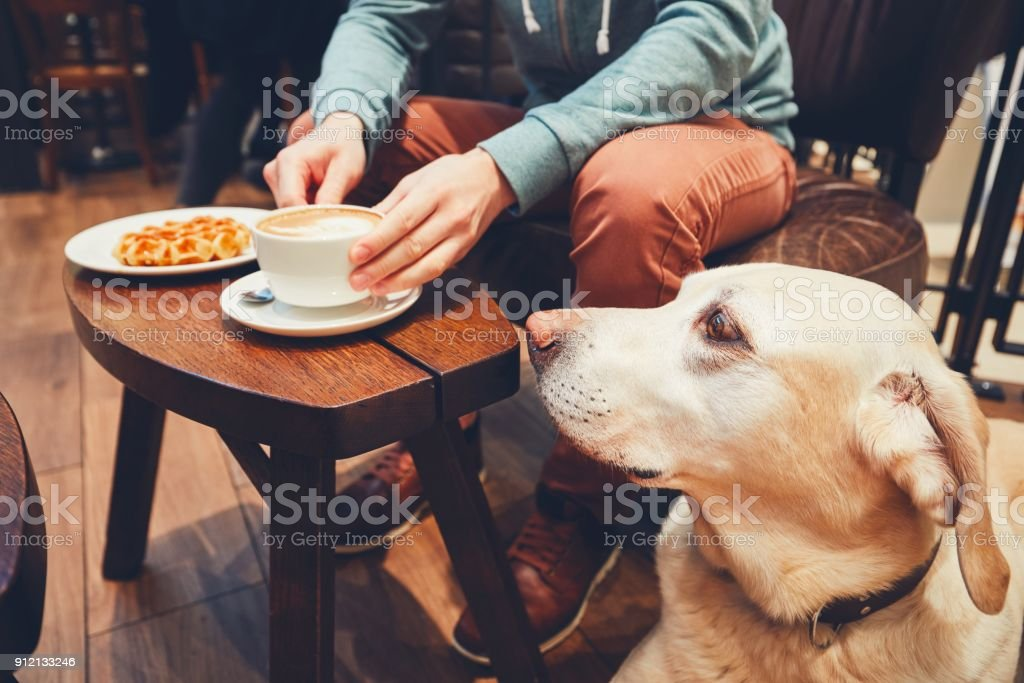 Curious dog in the cafe stock photo