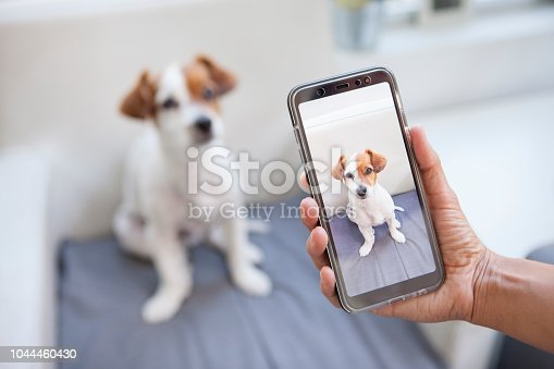 istock curious dog on a screen phone 1044460430
