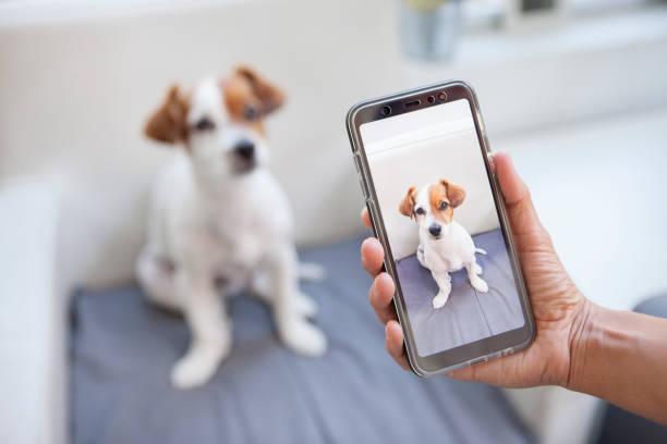 Curious dog on a screen phone picture id1044460430?b=1&k=6&m=1044460430&s=612x612&w=0&h=rqqqxtflgqdhigbz01 177mhzi0rhzawfva1ogmesjo=